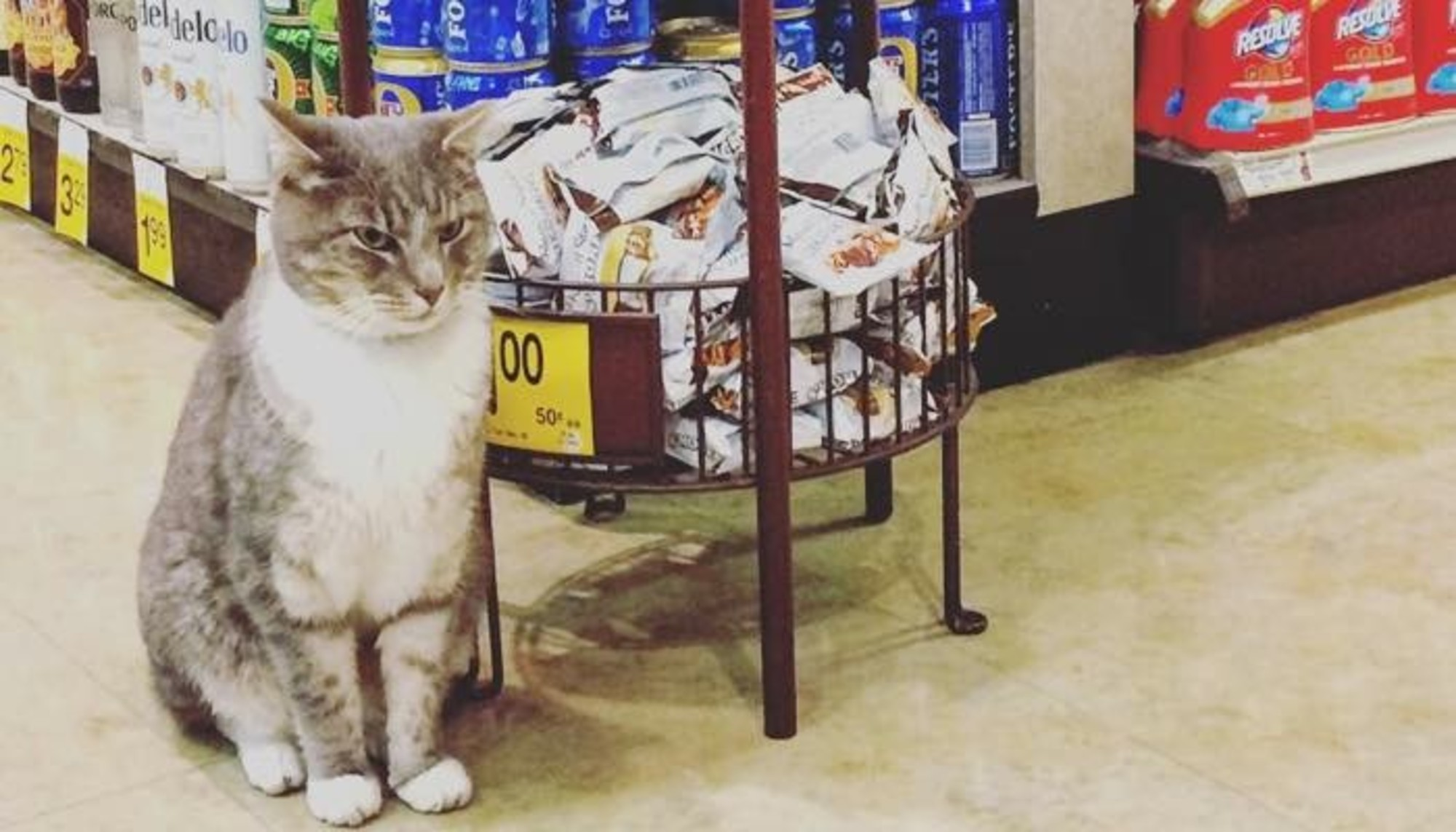 This Cat Greets Customers At Grocery Store