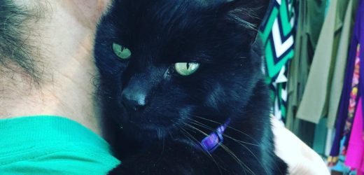This Portlander Printed a Hashtag on His Cat's Collar So That Adoring Fans Could Post Photos of it on Instagram