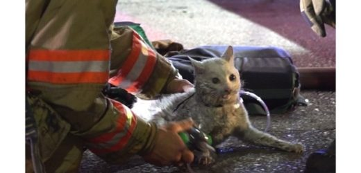 Firefighters Save Cat From Burning Building