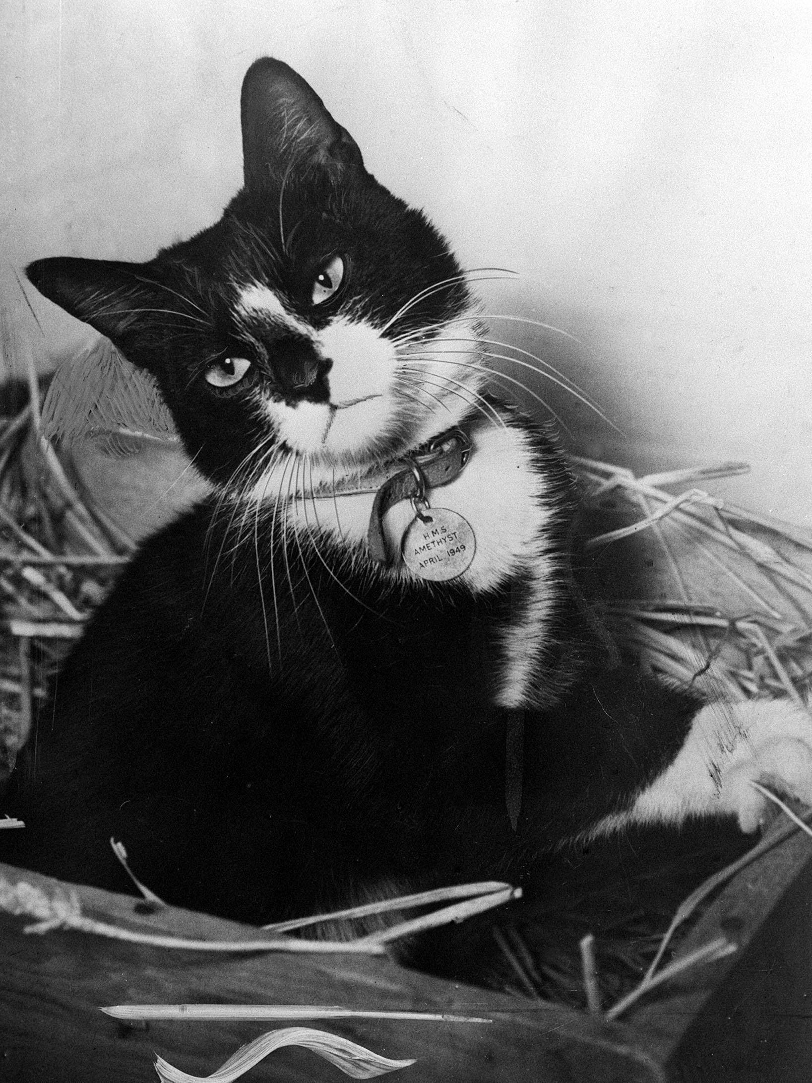 The Surprising Story of the Only Cat Ever to Win the Highest Honor for Animal Military Gallantry