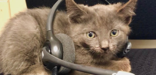 Rescue Kitten Joins 911 Dispatch Team