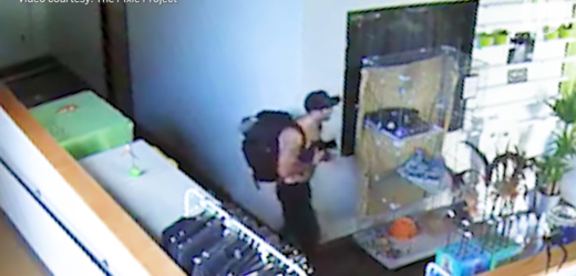 Shirtless Pot Smoking Bandit STEALS Kitten From Kennel